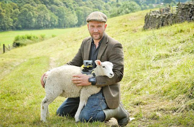 Sony recruits sheep to film the Tour de France