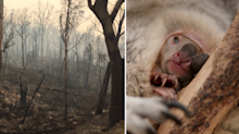 Outrage over advice to kill joeys orphaned in bushfires