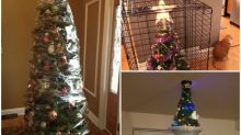 聖誕貓奴對策 保鮮紙包聖誕樹防偷襲