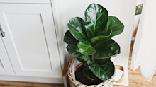 The Most Beautiful Indoor Plants to Add to Your Home