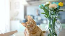 Shopping: Products for a happier and healthier furkid