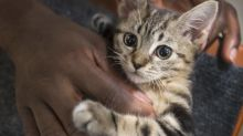 Cats are nice and enjoy time with humans, study suggests