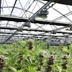 Why marijuana stocks are a long-term play as NJ votes on potential legalization