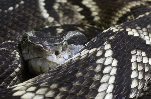 Nanofiber gel and snake venom work together to stop the bleeding