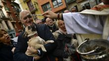 PHOTOS: Blessing animals in Spain on the feast day of St. Anthony
