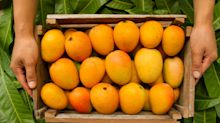 BUY ONLINE: 13 types of mangoes you should try this summer