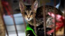 Carcasse di cani e gatti sulle spiagge di Hong Kong. Svelato un traffico internazionale verso la Cina