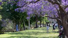 'Please say hello to my mum': a local's guide to Grafton, New South Wales