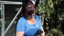 Rescuer opens home to baby flying-foxes orphaned by Australian bushfires