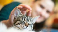 Ist der Besitzer aus dem Haus, leiden auch manche Katzen