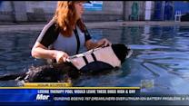 Losing therapy pool would leave dogs high and dry