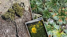 'Not adapting': Extinction fears for 20 native species