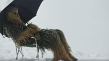 'Star Wars' shocker: Chewbacca's diva behavior revealed in behind-the-scenes video