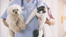 Why Petmed Express Inc.'s Shares Popped 19% Today