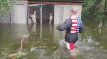 Perros al borde de la muerte son rescatados tras el huracán Florence