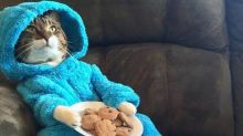 US Embassy 'sorry to disappoint' after Cookie Monster cat pyjama-party invitation sent out accidentally