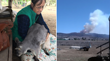 Former roo shooter 'paying her penance' by caring for joeys dying in bushfires