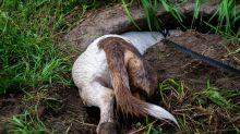 """Hund findet neues """"Spielzeug"""" - und sein Frauchen versinkt vor Scham im Boden"""