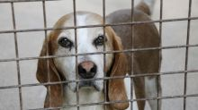 New UK law will raise maximum jail time for animal abusers to five years