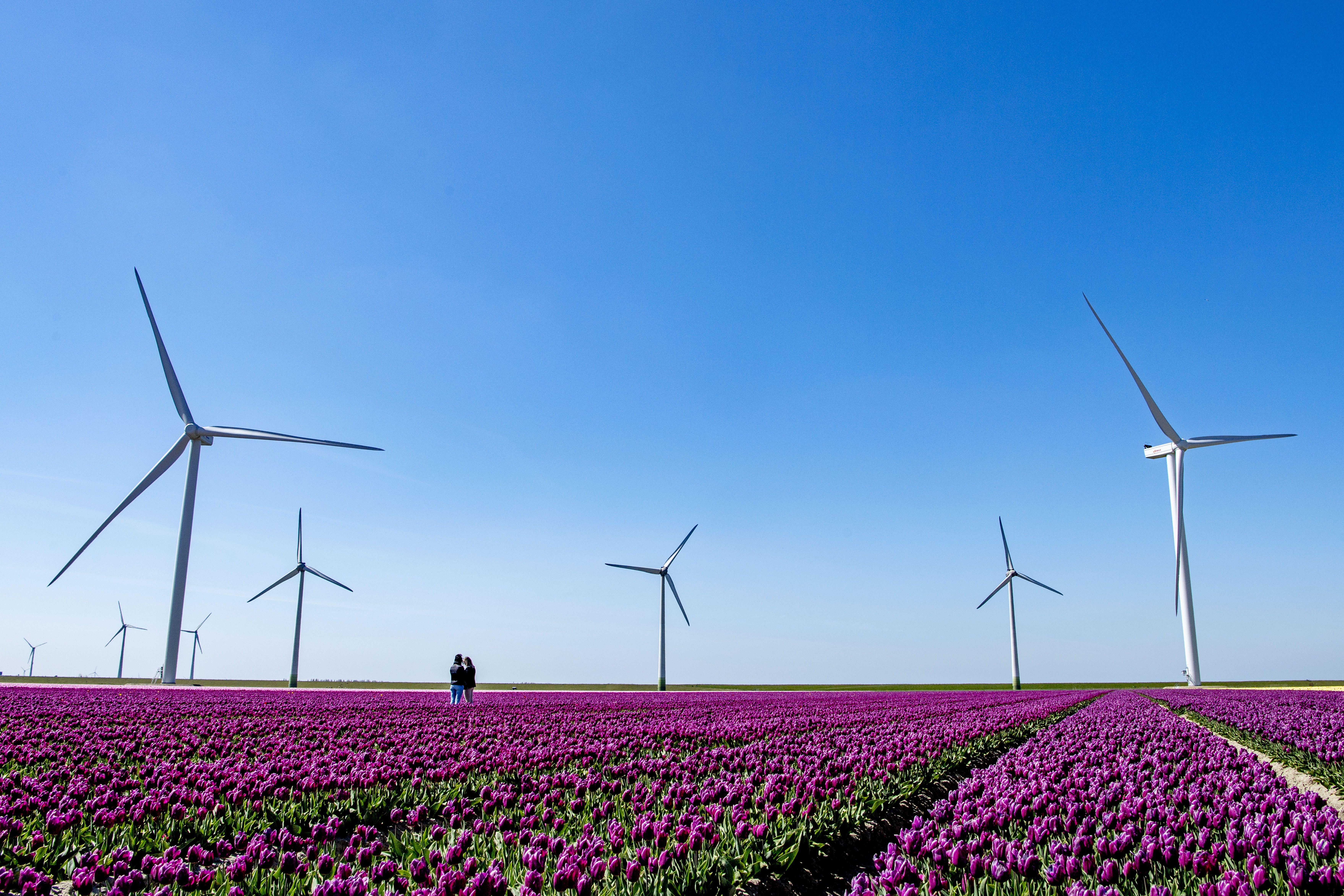 Loi climat: le Sénat lance une consultation à destination des élus locaux
