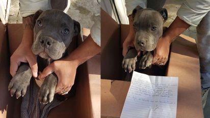 La triste historia de un niño que tuvo que abandonar a su perro para salvarlo de los maltratos de su padre