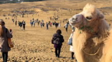 Pokemon GO players catch rare Safari Zone Pokemon among sand dunes at huge event in Japan