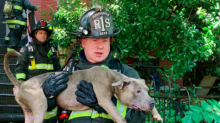 Firefighters rescue 6 dogs from burning home and revive one