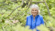 Duchess of Cornwall chic in royal blue in new portrait released to mark 73rd birthday