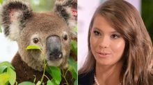 Bindi Irwin Shares Update On Bushfire-Affected Koala Who Is 'On Road To Recovery'
