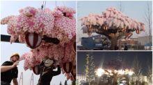 【有片】日本Legoland自製櫻花樹 高4米夜晚會發光