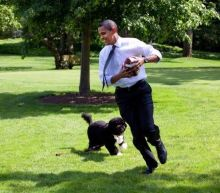 Photos show how the Obamas' family dog Bo was an integral part of their life at the White House