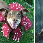 Your Dog Instantly Becomes a 'Stranger Things' Demogorgon With This Etsy Costume