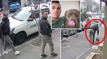 CCTV captures dog thief stealing staffy from Melbourne yard