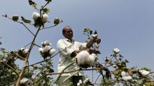 India's cotton exports gain pace as overseas price rise, rupee weakens