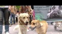Euro 2012 stray dog cull draws protests