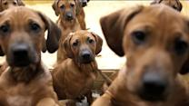NY pet owners could face fine for not picking up after dogs