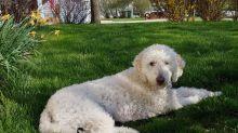 Hund oder Handpuppe? Optische Täuschung verblüfft das Internet