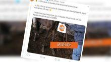 Gers : 19 chevaux, amaigris et maltraités, sauvés par la SPA chez un particulier