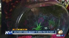 Southwest Airlines bans university student's pet fish from plane
