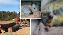 'Could have been prevented': Disturbing images reveal fatal threat to wildlife