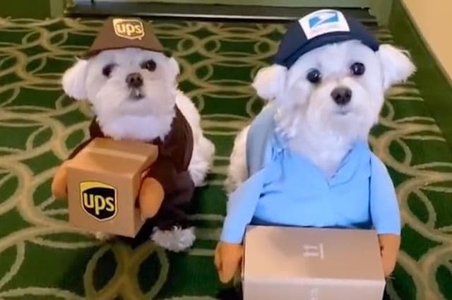 These two Maltese dogs are going to crack you up