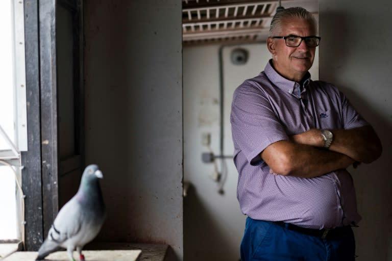 Joel Verschoot The Man With Million Euro Pigeon