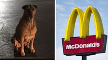 Dog owner reveals pet's very clever ploy to get free McDonald's burgers