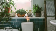 ~Shower plants~ are a thing and they are taking over Pinterest