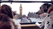Londres oferece ônibus com passeio turístico para cachorros