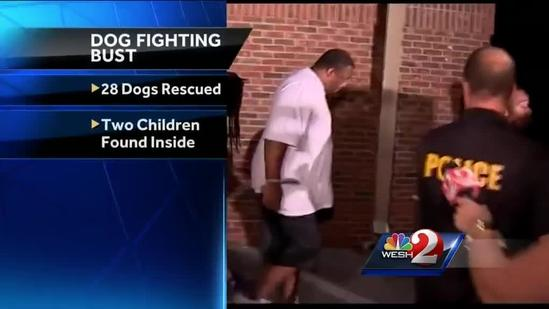 28 dogs seized from fighting ring being evaluated