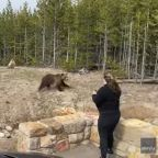 Yellowstone tourist was caught on camera too close to a grizzly. She was just charged