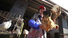 Ora in Cina spunta l'aviaria