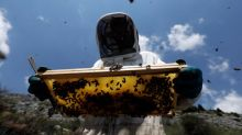 The bees that are transported to France's Provence region every year
