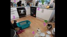女子家廚房出現五隻貓「聚會」 她大驚:我只養三隻啊!